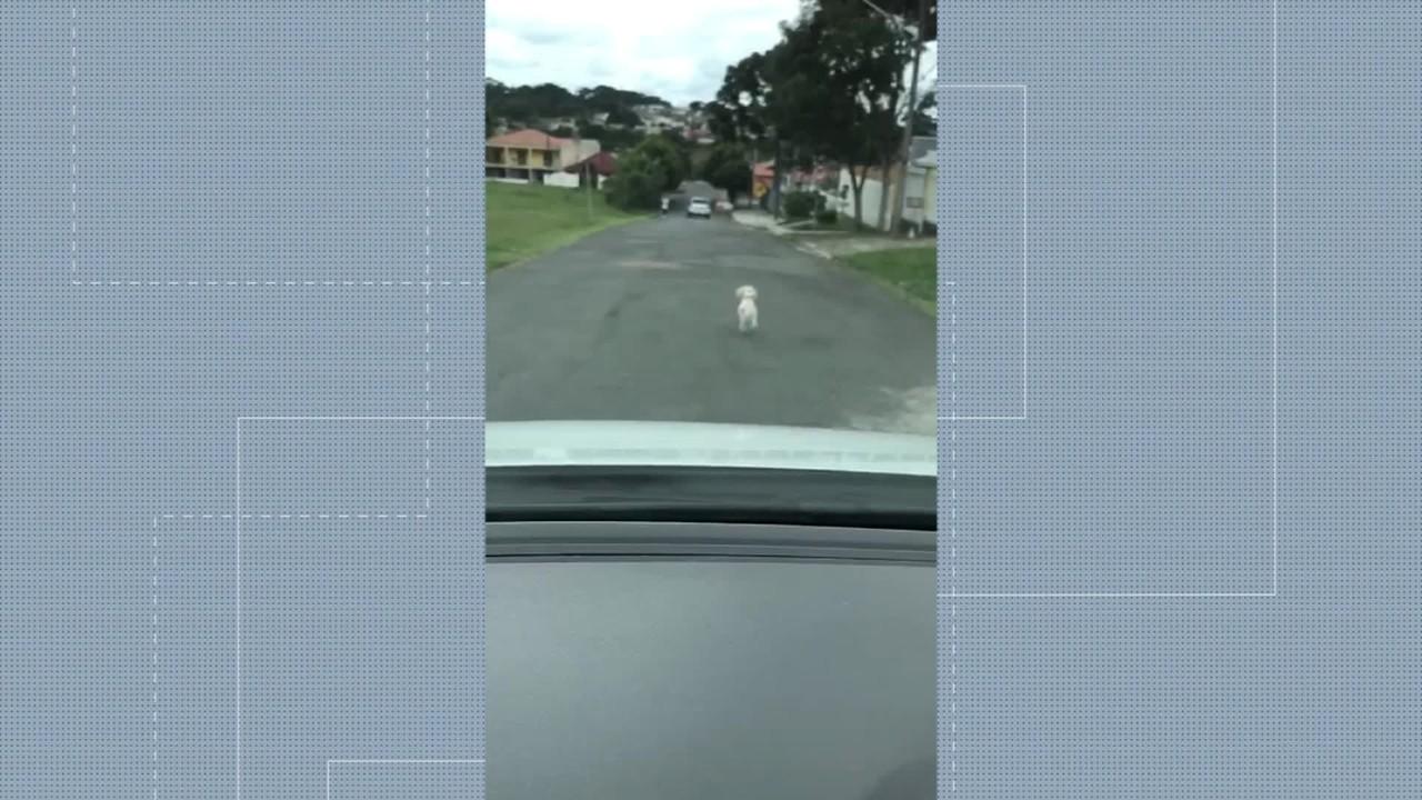 Vídeo mostra momento em que cadela é abandonada, em Curitiba