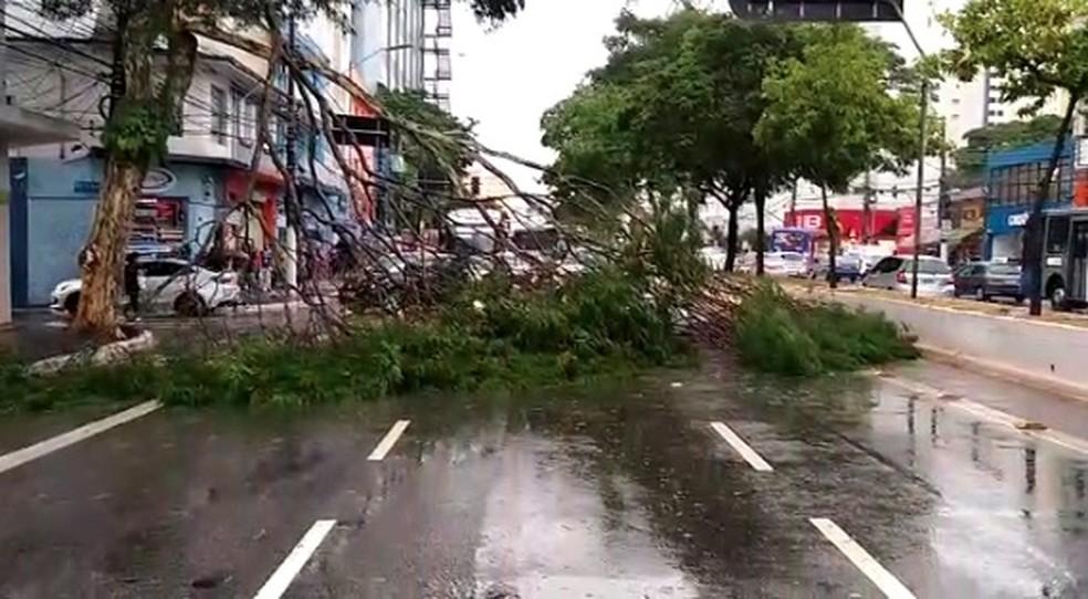 Árvore que caiu parcialmente na Avenida Jabaquara, na Zona Sul de São Paulo, nesta segunda, 30 de novembro.  — Foto: Reprodução/TV Globo