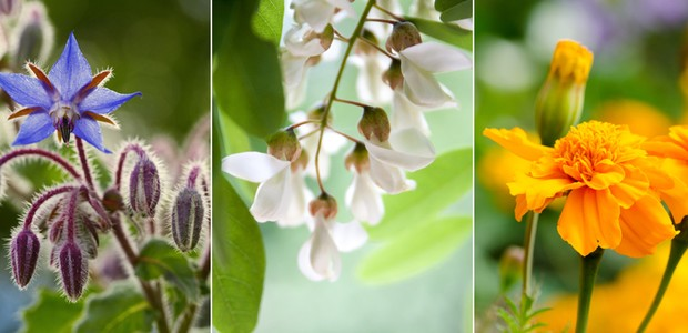 Flores comestíveis (home) (Foto: Casa e Jardim)