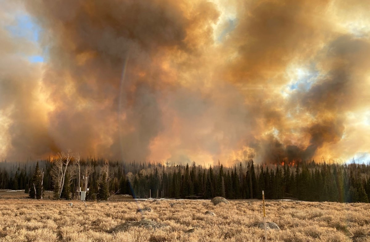 Queimadas florestais podem aumentar o risco de contrair COVID-19, diz estudo (Foto: Divulgação: DRI)