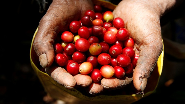 agricultura-cafe (Foto: Jorge Cabrera/Reuters)