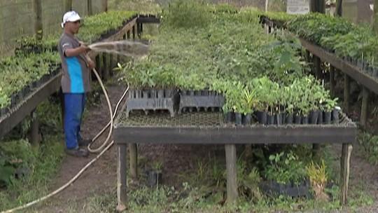 Restos de alimentos do preparo de quitutes da Festa do Divino de Mogi viram adubo; 70 mil mudas já foram plantadas com material
