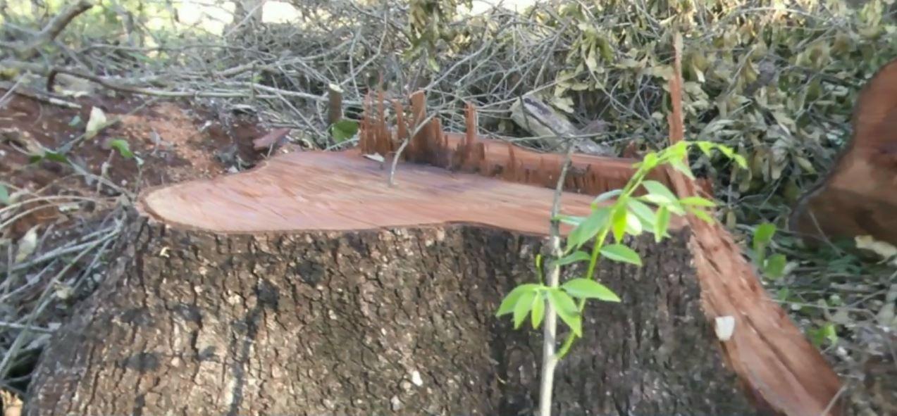 Derrubada de árvores para ampliação de cemitério preocupa moradores de Foz do Iguaçu
