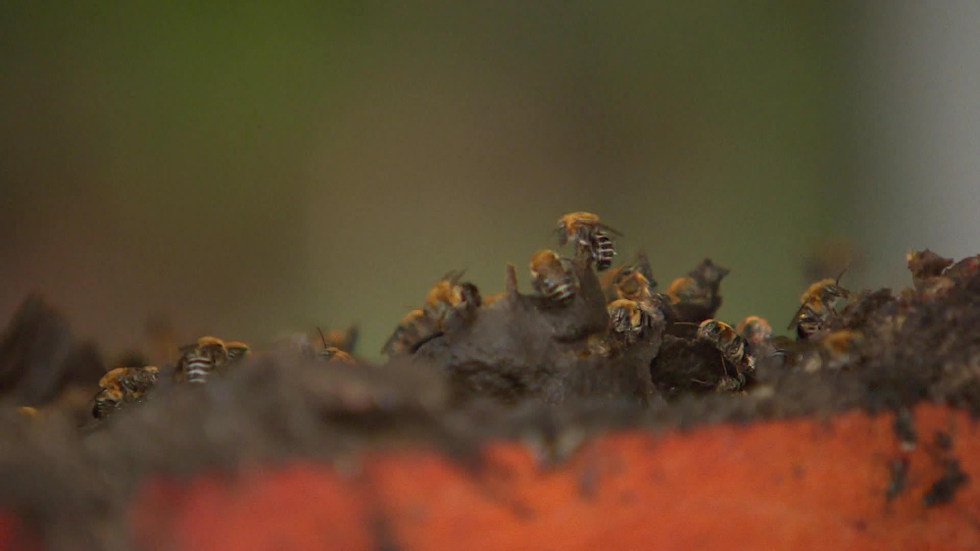 Após ataque de abelhas, duas pessoas são socorridas, dois cachorros morrem e um fica ferido, em Cascavel