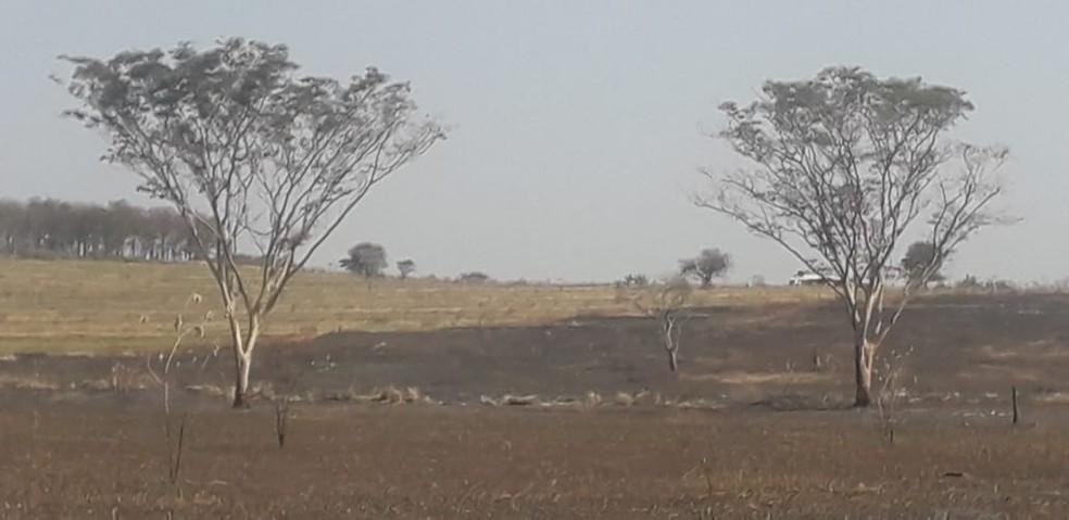 Áreas queimadas foram em Pacaembu e Marabá Paulista — Foto: Polícia Ambiental