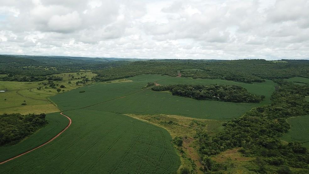 Imagens que revelaram o desmatamento  — Foto: PMA/Divulgação