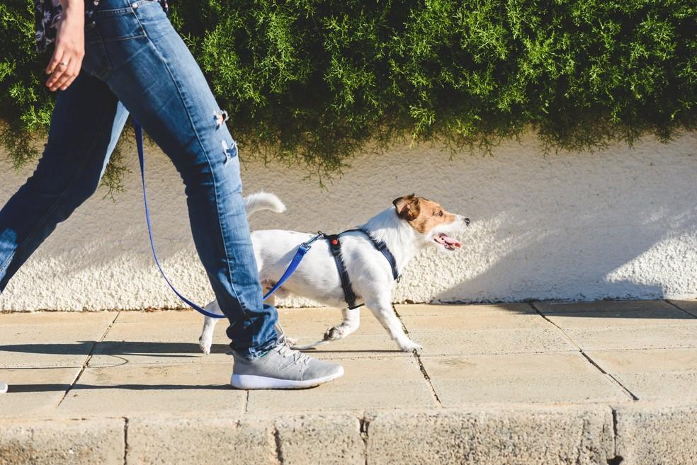 Passear com o cachorro obriga o dono a caminhadas diárias, o que tem impacto positivo na saúde cardiovascular — Foto: iStock