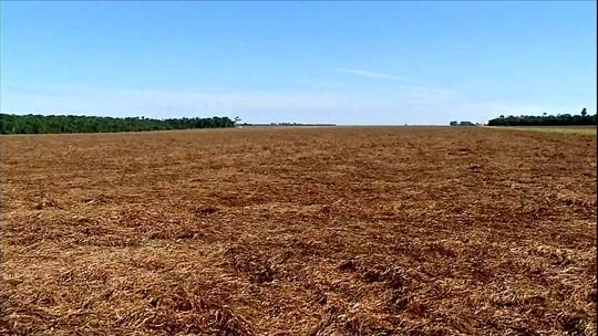 Produtores de soja de MT aproveitam vazio sanitário para cuidar do solo