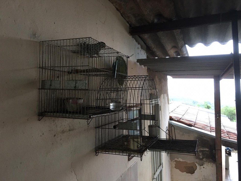 Em Pompeia, a polícia apreendeu pássaros silvestres que estavam sendo mantidos em cativeiro — Foto: Polícia Ambiental/Divulgação