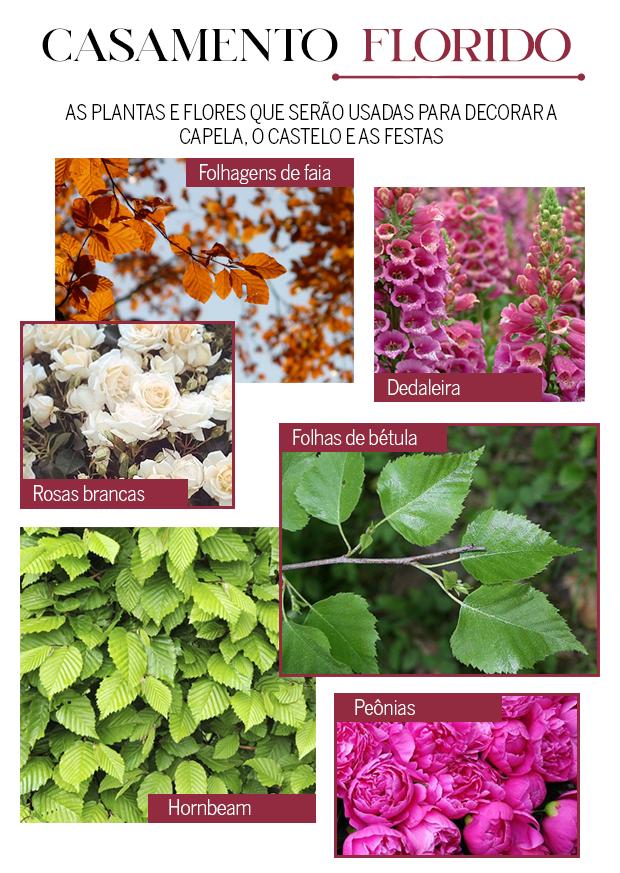 Plantas (Foto:  )