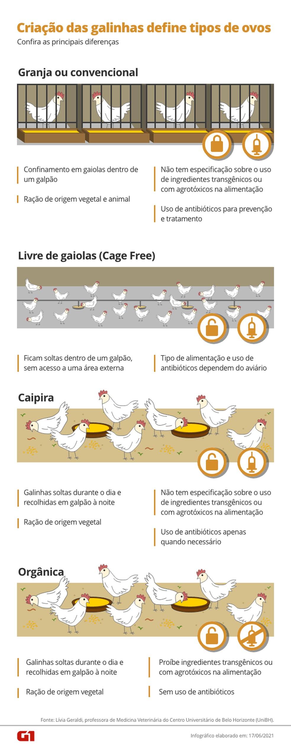 Tipos de ovos são definidos pela criação das galinhas — Foto: Arte/G1