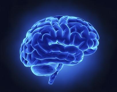 Nosso cérebro e as proteínas da longevidade