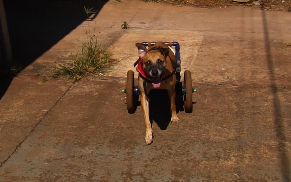 Vários animais deficientes já foram beneficiados pelo projeto (Foto: TV Anhanguera/Reprodução)