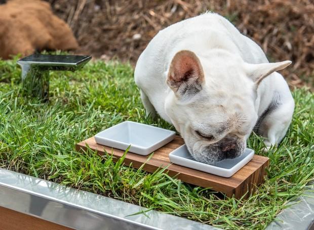 Cachorro bebendo água no telhado sustentável (Foto: DesignBoom/Studio Schicketanz/Reprodução)