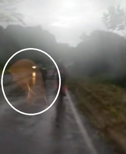 Devoto de Nossa Senhora diz ter visto imagem da santa em passeio de bicicleta: 'Fiquei impressionado'