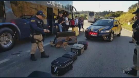 Jovem é preso com 19 Kg de maconha na praça de pedágio de São Gonçalo do Sapucaí, MG