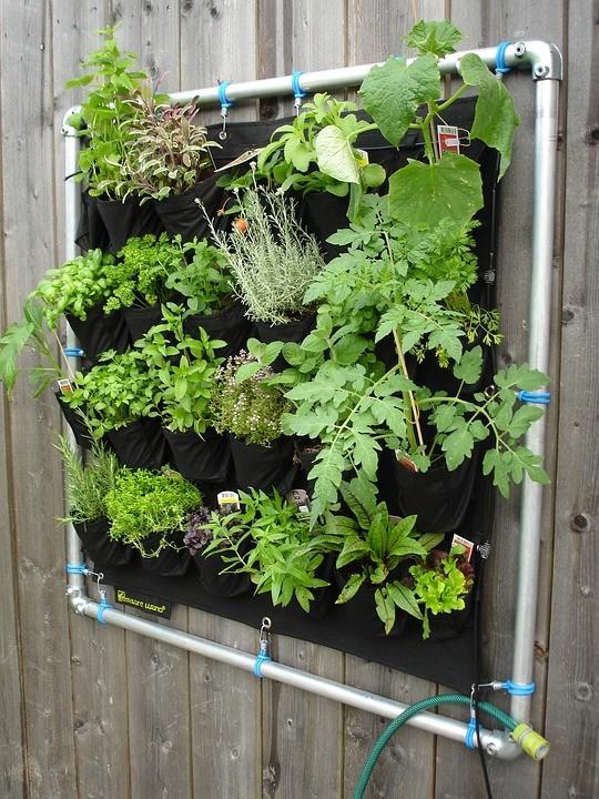 Curso online ensina como cultivar hortaliças para consumo doméstico
