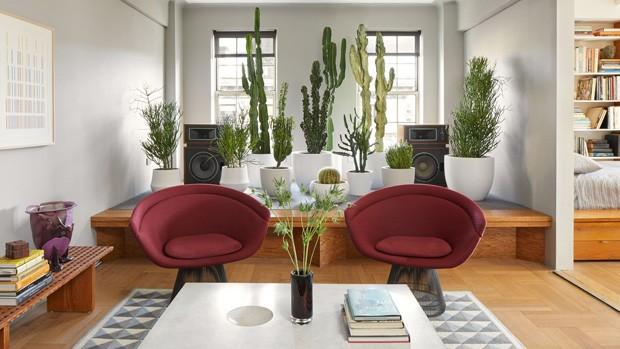 Décor do dia: jardim de cactos e suculentas na sala de estar (Foto: Divulgação)