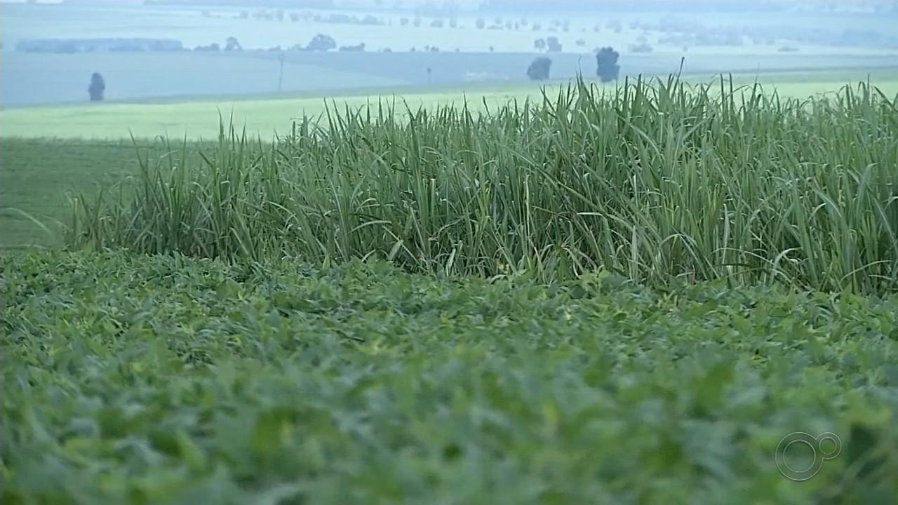 Plantação de soja avança e preço do grão atrai produtores do centro-oeste paulista