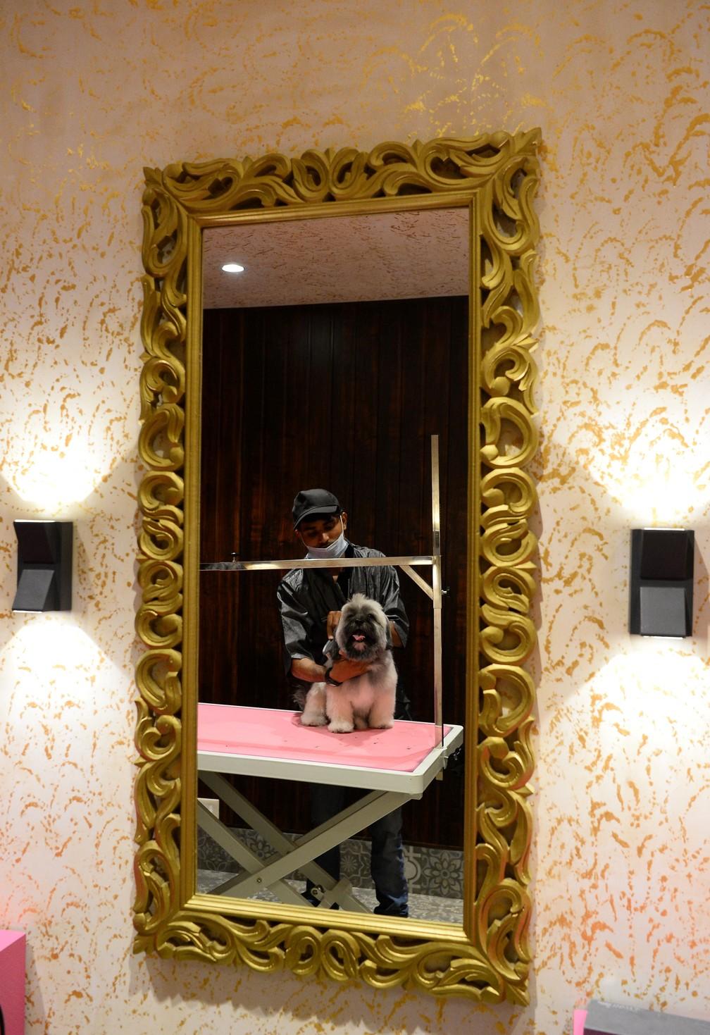 Cães passam por sessão de cabeleireiro no hotel indiano (Foto: Sajjad Hussain/AFP )