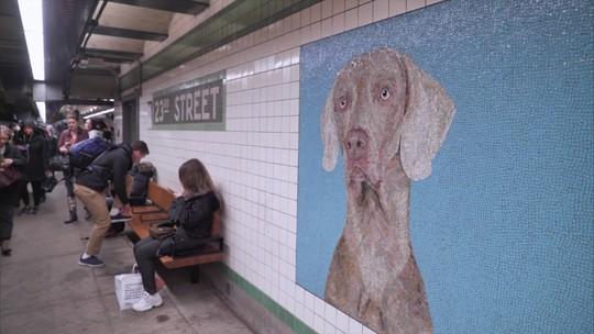 Pedro Andrade confere instalação de William Weigman na estacão de metrô da Rua 23