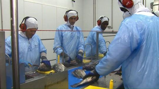 Cooperativas agrícolas do Paraná projetam 2018 com abertura de vagas de emprego