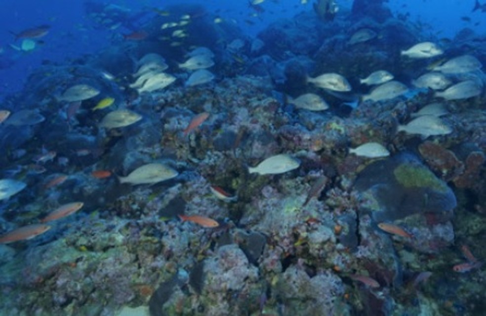 Imagens produzidas pela equipe da UFPE mostram peixes na área do banco  de corais — Foto: UFPE/Divulgação