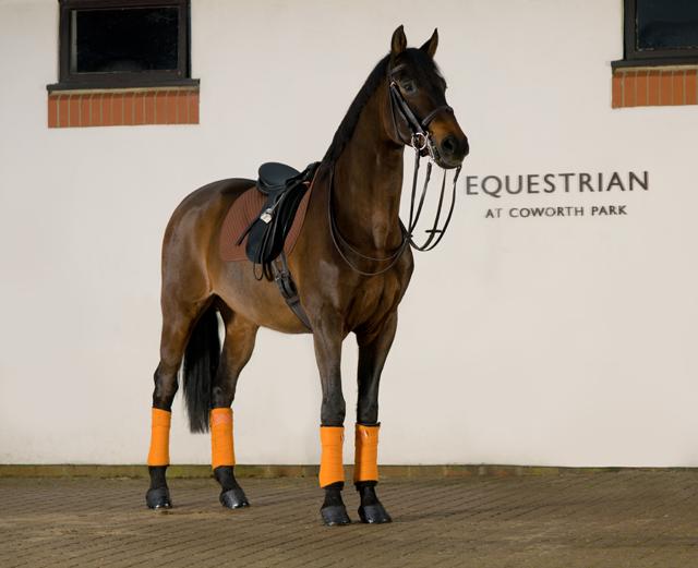 Cerca de 30 cavalos estão disponíveis para uso dos hóspedes nos estábulos da propriedade que encantou Harry e Meghan (Foto: Divulgação/The Dorchester)
