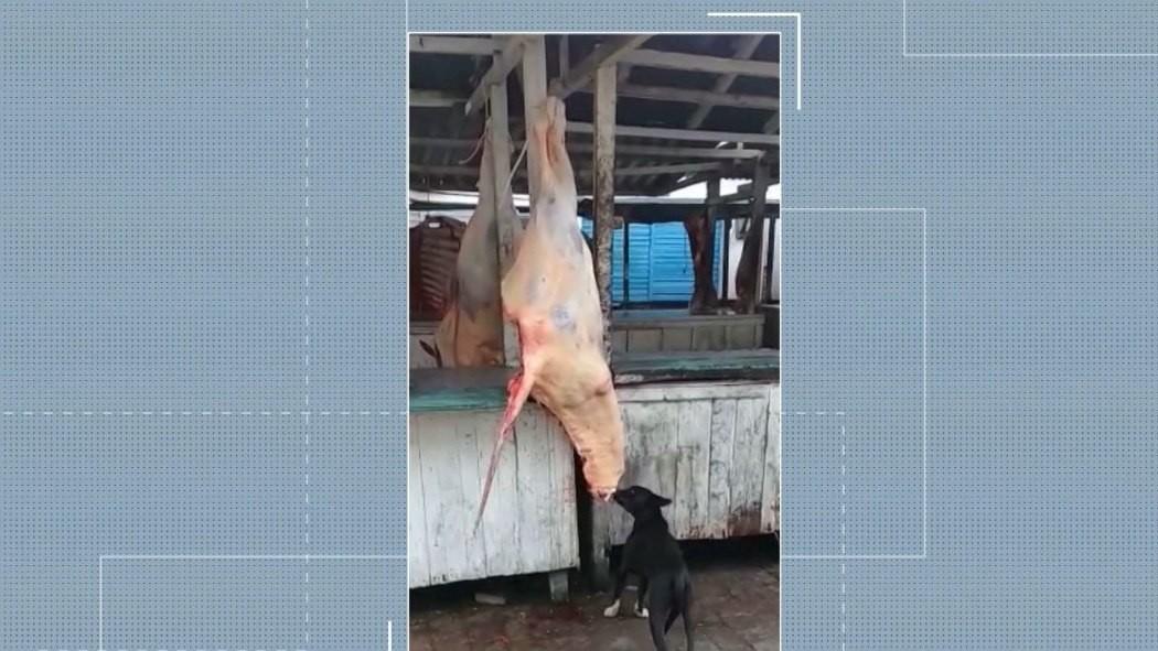 Vídeo mostra cachorro mordendo carne exposta para venda em feira de Remígio, na PB