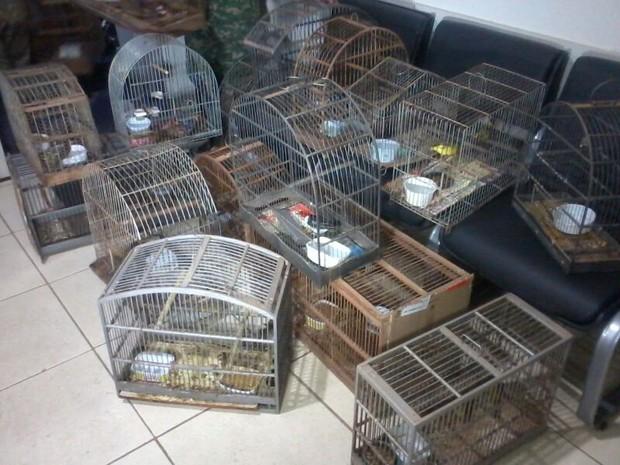 25 pássaros silvestres foram apreendidos em Montes Claros. (Fot Ana Carolina Ferreira / Inter TV MG)