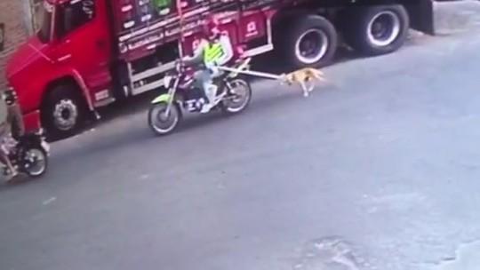 Suspeito de maus-tratos recebeu R$ 5 para se desfazer de cachorro, diz Polícia Civil