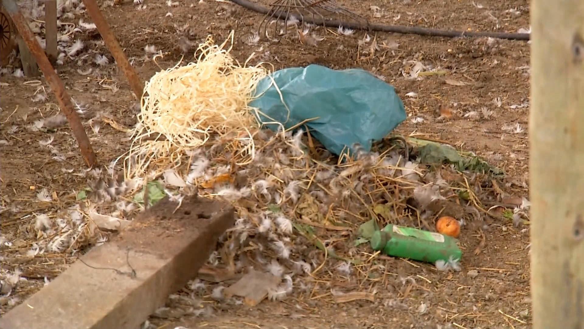 Animais aparecem mortos em sítio e deixam proprietários intrigados em Nova Friburgo, no RJ - Notícias - Plantão Diário