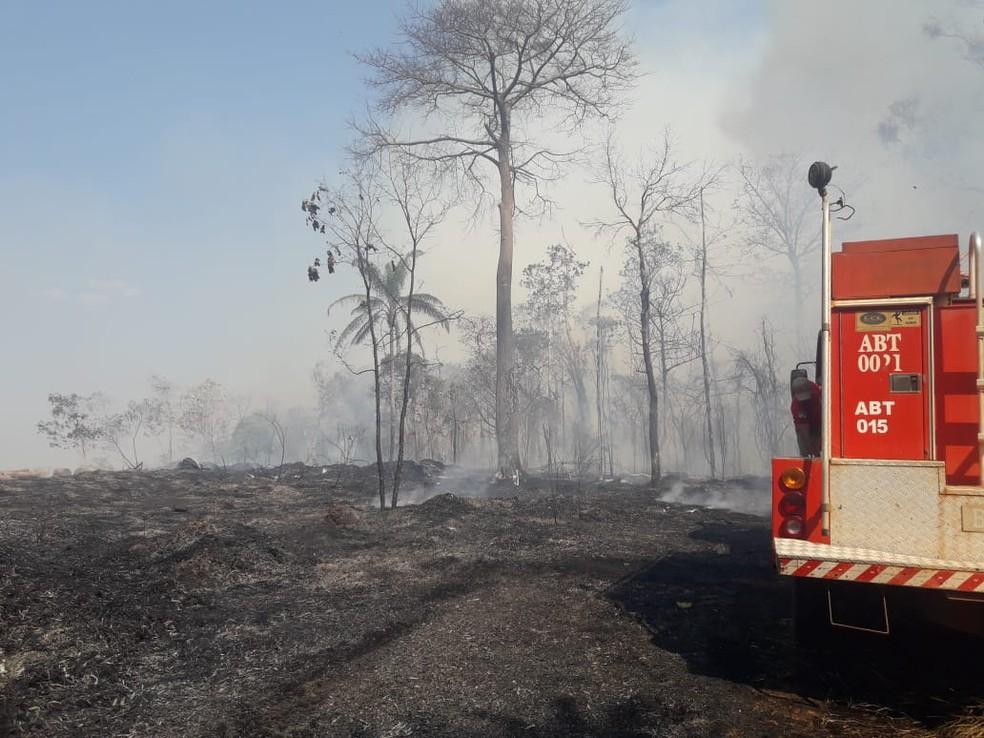 Cerca de 10 bombeiros foram chamados para controlar o incêndio em Espigão — Foto: Secretaria Municipal de Meio Ambiente/Divulgação