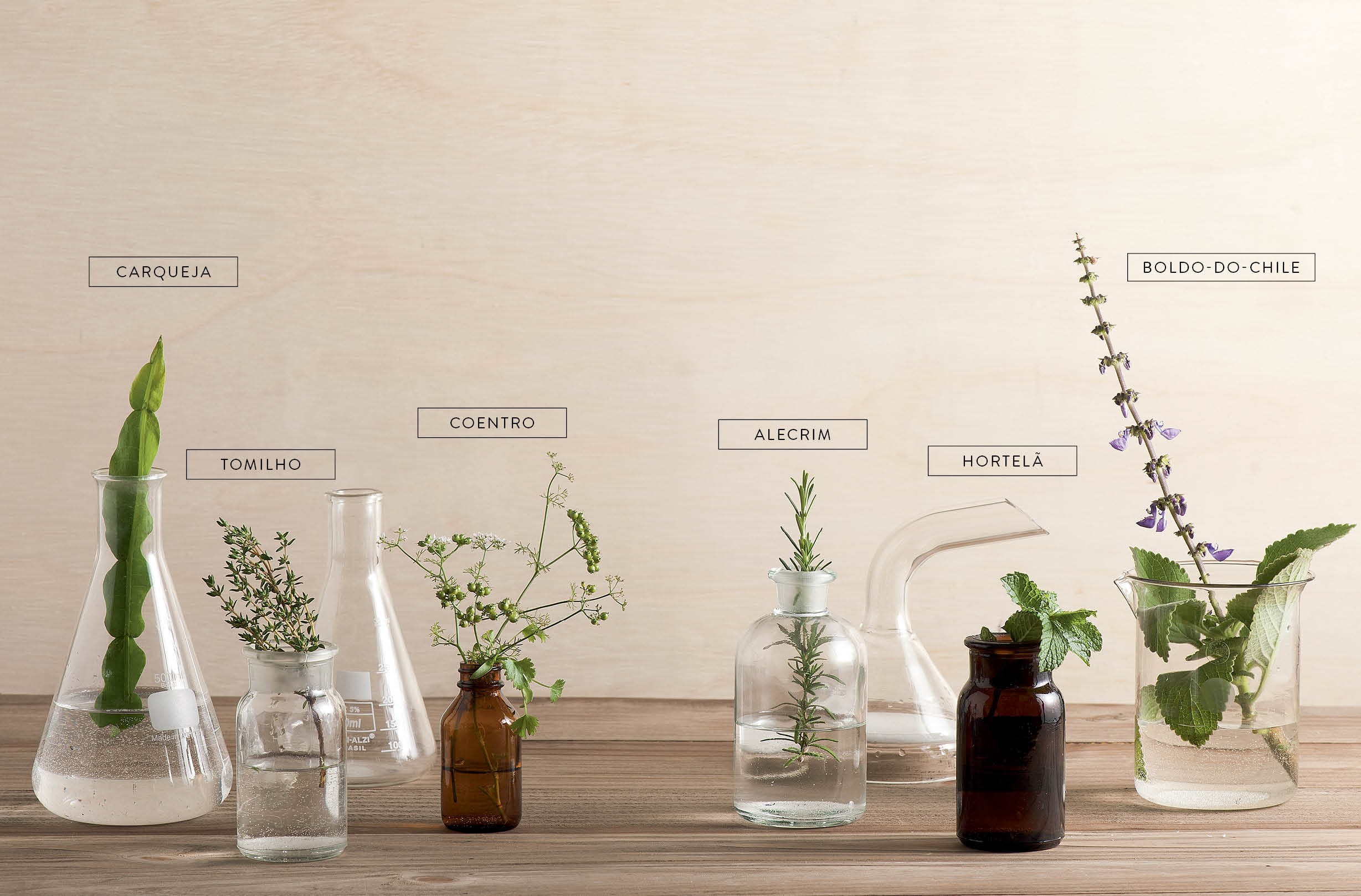 Paisagismo - plantas medicinais (Foto: Iara Venanzi / Editora Globo)