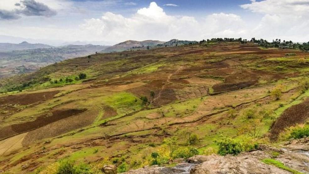 Hoje, apenas cerca de 5% da Etiópia é coberta por florestas, em comparação com cerca de 45% há cerca de um século — Foto: Sarah Hewitt