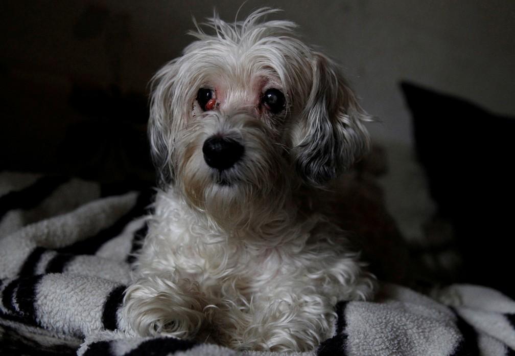 5 de janeiro - Zsazsa, uma cachorrinha de 9 anos, é vista após ser resgatada por serviços de proteção animal. Ela foi encontrada ao lado do corpo de seu dono, morto semanas antes, em Budapeste, na Hungria (Foto: Bernadett Szab/Reuters)