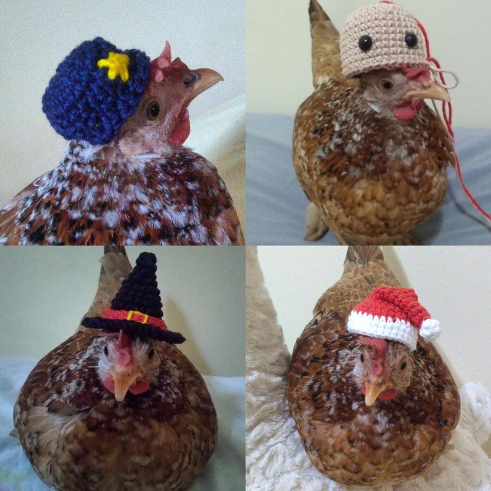 Galinha em MS tem coleção de chapéu e rede social  — Foto: Montagem/G1 MS