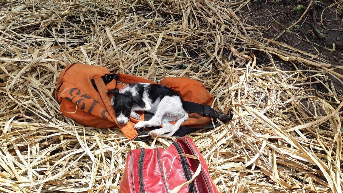 Bombeiros salvam cachorra durante resgate de jovem que caiu em penhasco em Marília