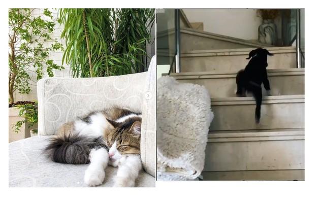 Os animais domésticos da atriz brincam na poltrona e na escadaria   (Foto: Reprodução)