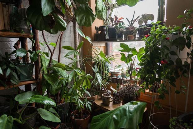 Modelo e ambientalista tem 670 plantas em apartamento em Nova York (Foto: HomesteadBrooklyn / Joey L )