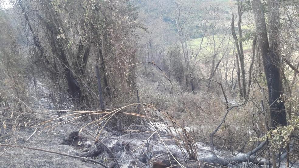 Equipe constatou queimada de cana-de-açúcar em propriedade de mais de 170 mil hectares em Dois Córregos — Foto: Polícia Ambiental/Divulgação