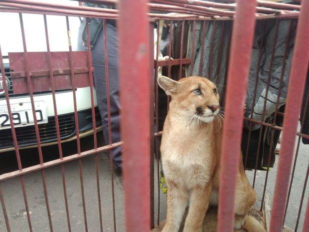Animais serão devolvidos à natureza (Foto: Samuel Rodrigues Rocha dos Santos/Arquivo Pessoal)