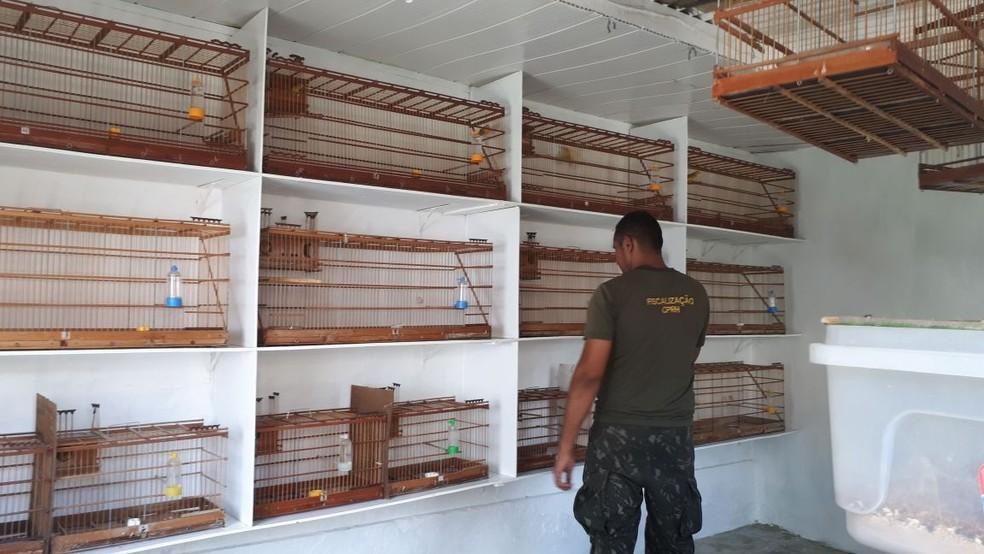 Pássaros foram apreendidos em Gravatá  (Foto: CPRH/Divulgação)