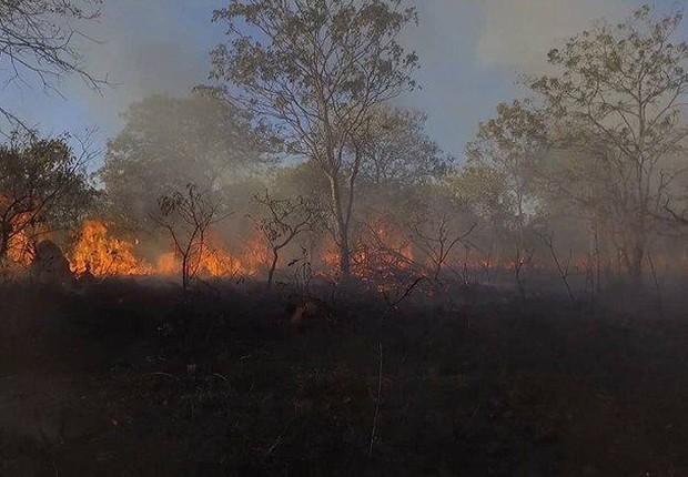 Incêndio no Parque Nacional da Chapada dos Veadeiros, em Goiás (Foto: Divulgação/ICMBio)