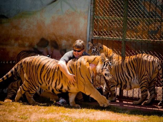 Além dos 12 tigres, mantenedouro abriga mais duas leoas e cães (Foto: Arquivo Pessoal)
