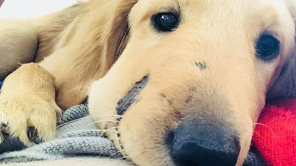 O filhote Todd ficou famoso depois que sua foto foi compartilhada nas redes sociais, com o rosto inchado pela picada de cobra (Foto: Paula Goodwin)