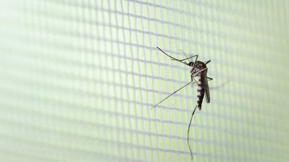 Método tem grande potencial contra outras doenças transmitidas pelo mosquito, como zika, febre amarela e febre chicungunha — Foto: Getty Images via BBC