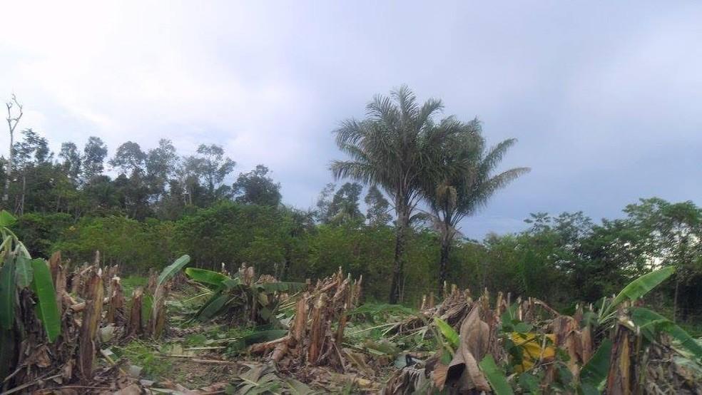 Moradores dizem que tiveram plantações destruídas pelos fazendeiros (Foto: Comissão Pastoral da Terra (CPT) de Mato Grosso)