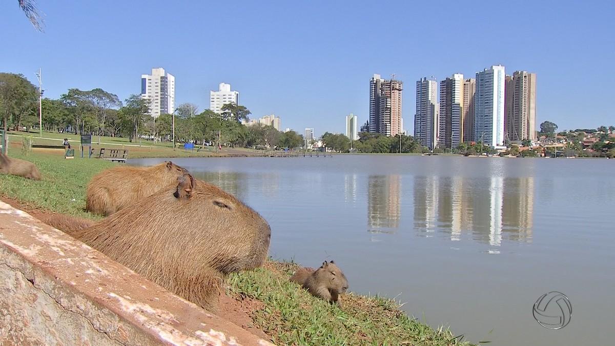 Iniciativa privada poderá administrar áreas e implantar estruturas no Parque das Nações