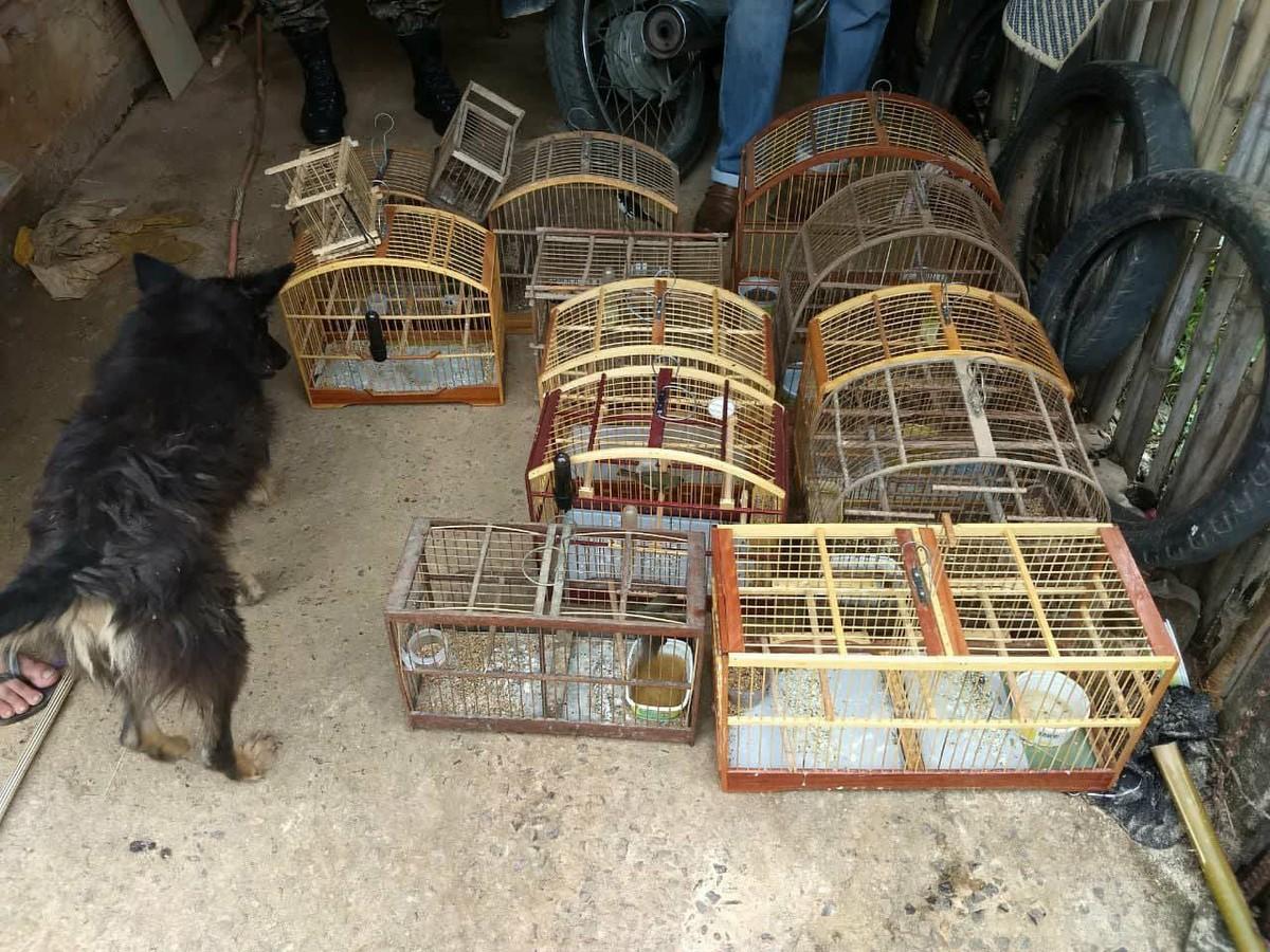 Polícia Ambiental apreende 22 pássaros silvestres mantidos em cativeiros em Itaperuna, no RJ